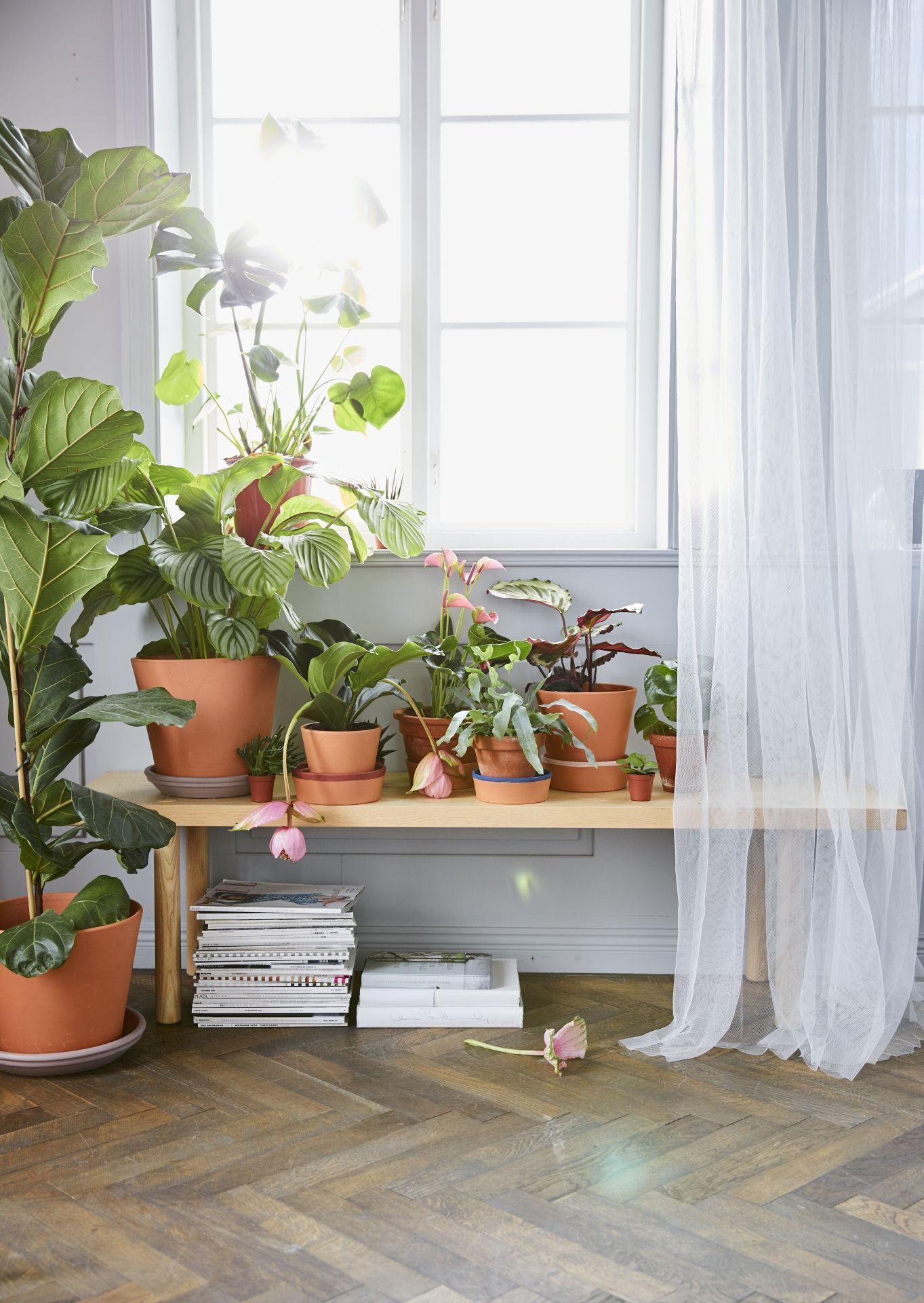 Decoratie Planten Binnen.Bloempot Met Schotel Ingefara Buiten Binnen Buiten Terracotta In