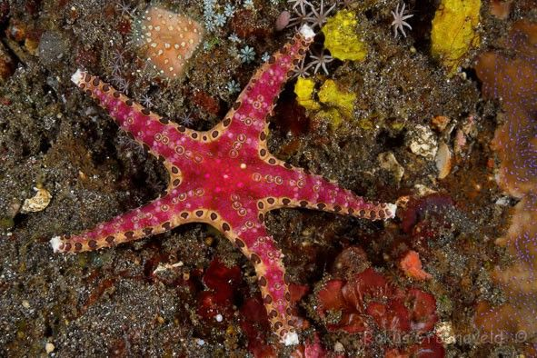 Starfish Anatomy Worksheet   Diverosa, sea stars & brittle stars ...