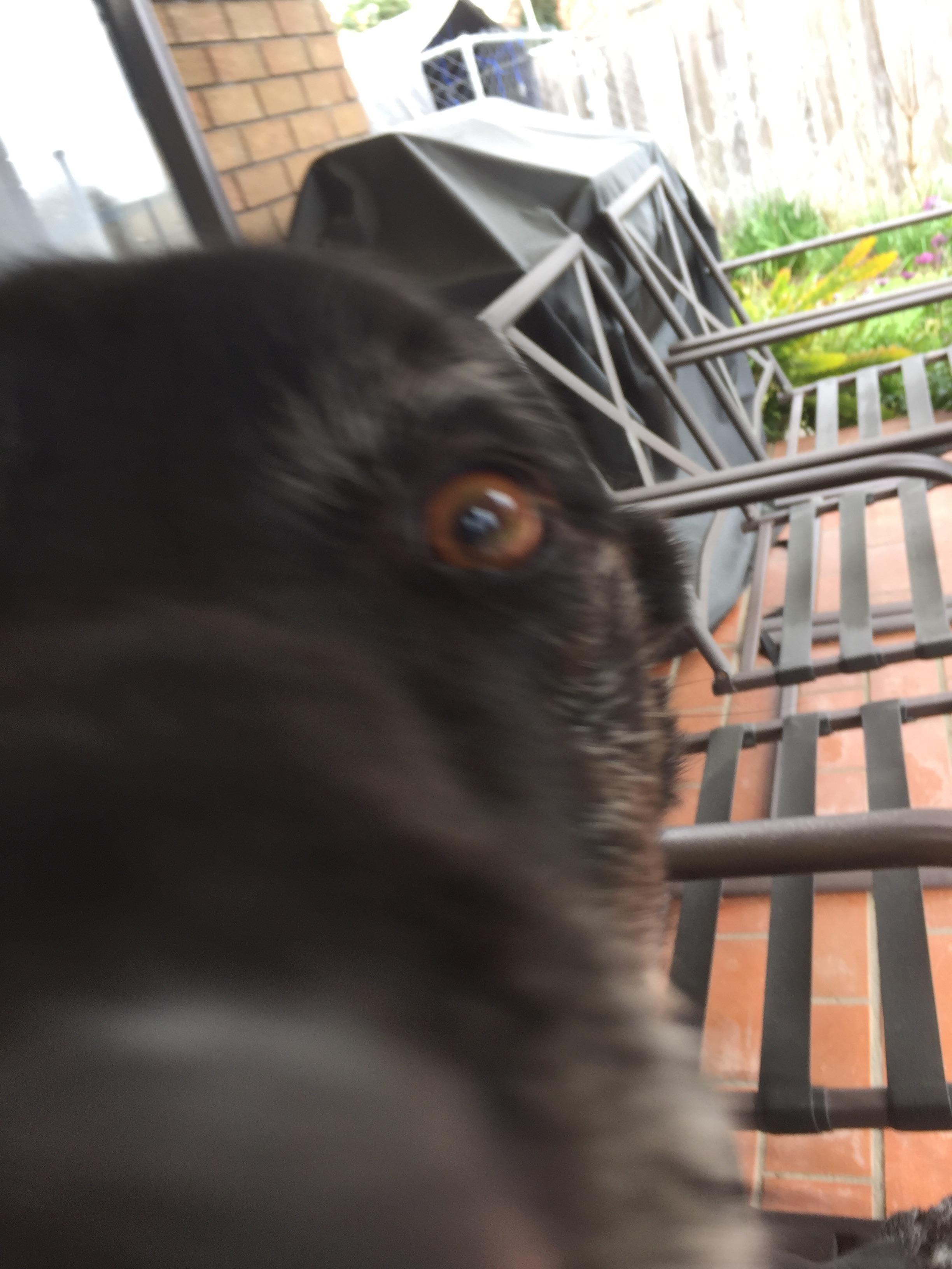 My dogs eyebrow games on fleek iftyftnm cute and