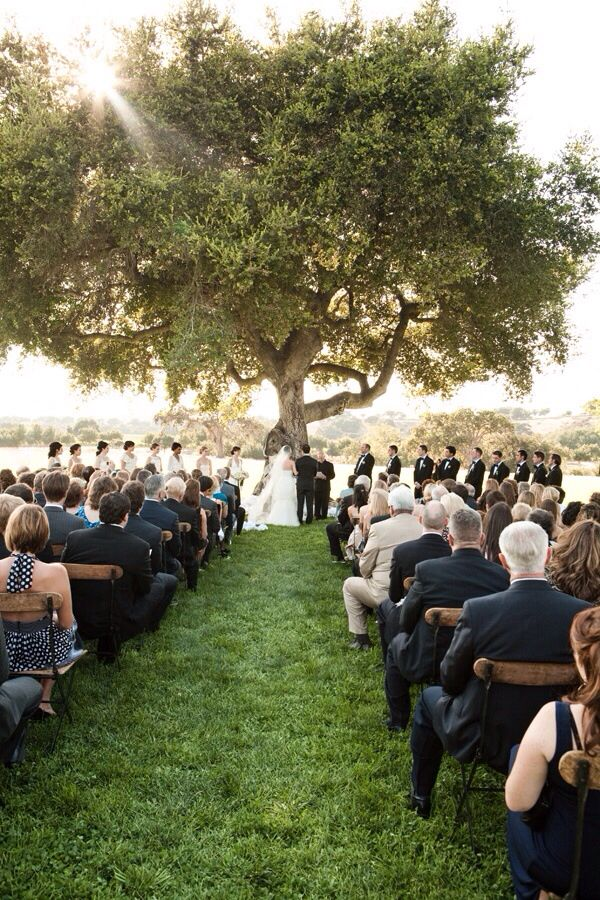 Big Tree Small Wedding Reception Weddings And Wedding