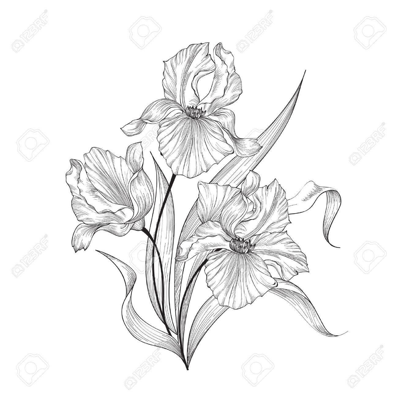 Floral Bouquet With Flower Iris Vintage Fourish Greeting Card Design Swirl Flower Posy Engraving Border Flora Iris Flower Tattoo Flower Drawing Iris Flowers