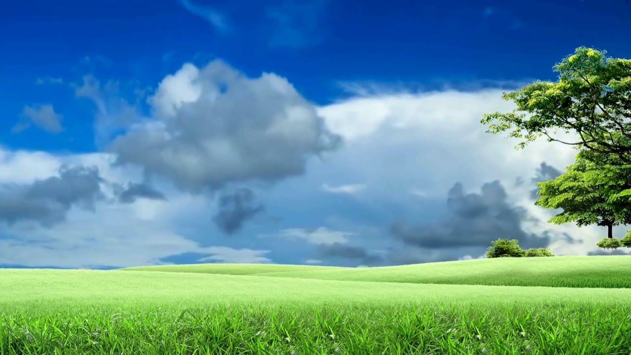 Nature Grass Field Background Video Landscape Video 865 Smoke Animation Nature Backgrounds Green Screen Footage