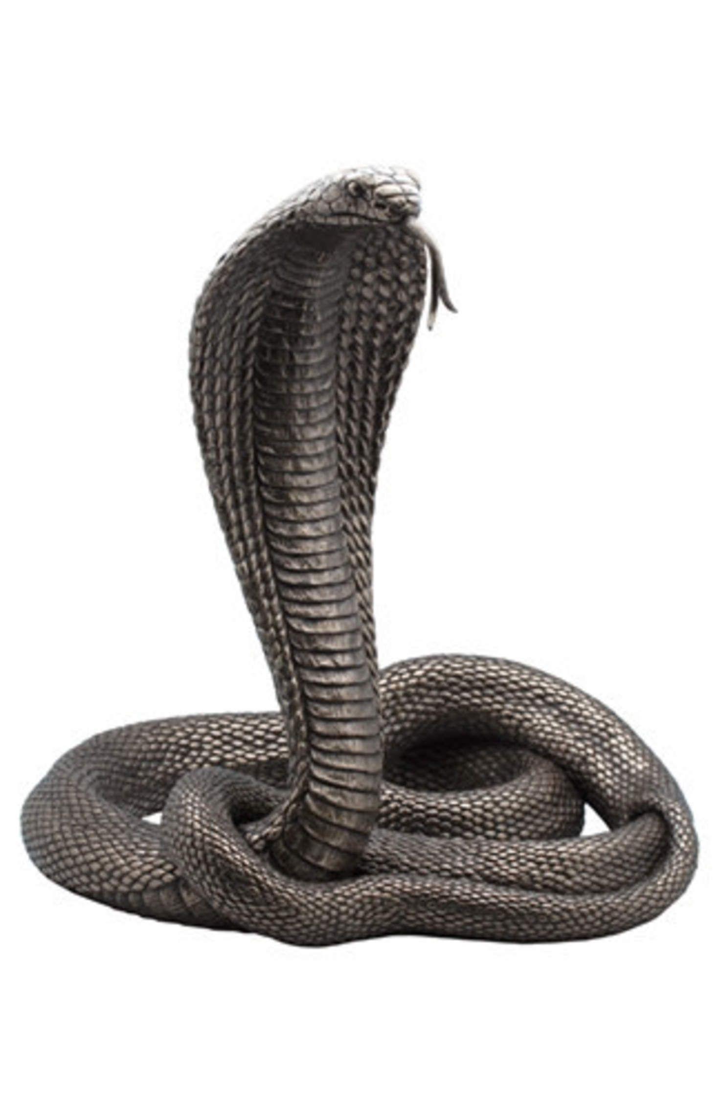 King Cobra Snake Head Anatomy Topsimages