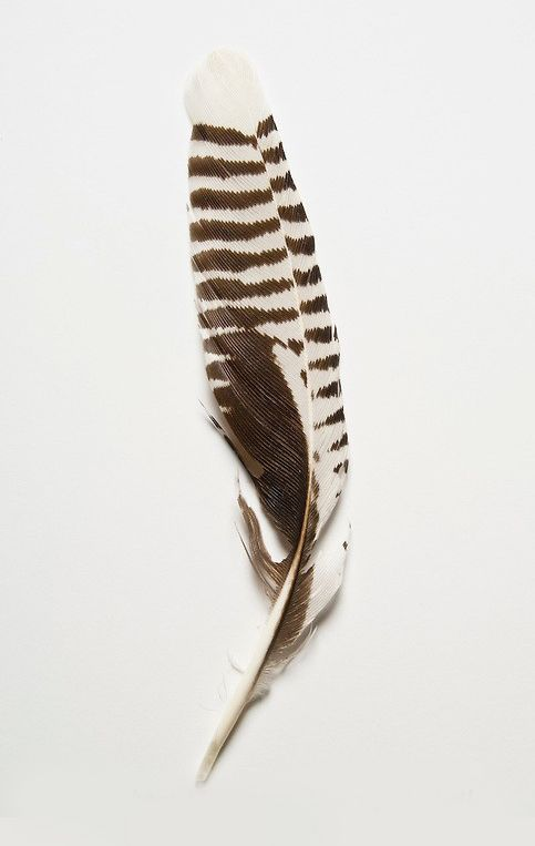 Pin By Marge Baird On Feathers In 2020 Feather Painting Feather