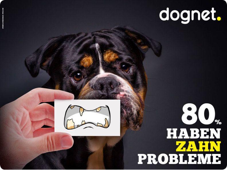 Zahnpflege für Hunde – Was hilft wirklich und was nicht