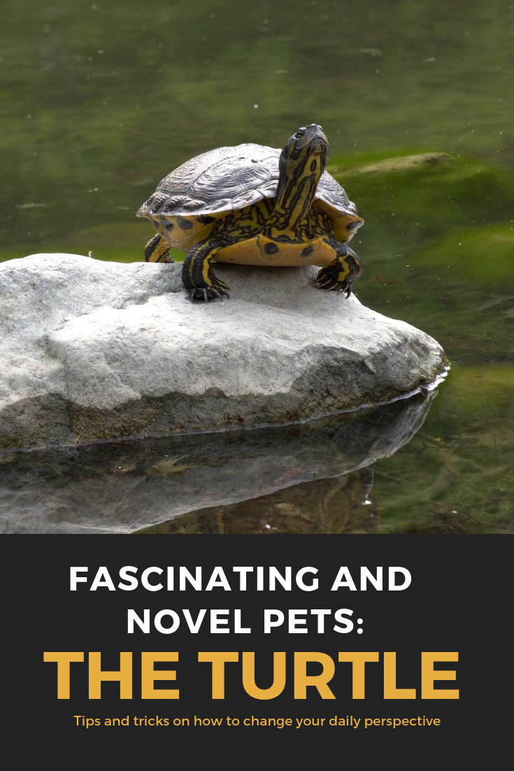 Fascinating And Novel Pets The Turtle With Images Pets Types Of Turtles Turtle