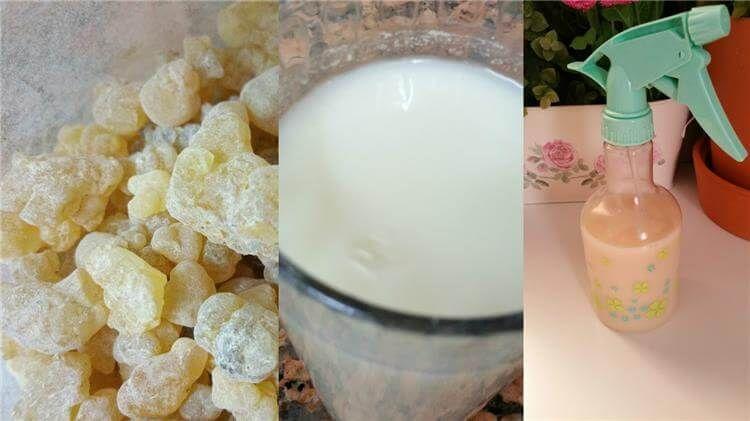 طريقة استخدام لبان الذكر Food Milk 10 Things