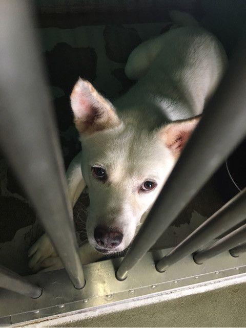 里親募集中 熊本県緊急事態でしょ 八代保健所からのsos 犬 動物 里親