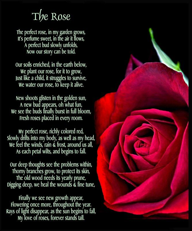 Happy Rose Day Quotes For Friends Rose Quotes Rose Poems Friends Quotes