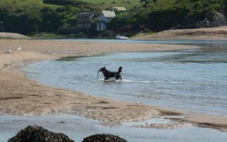 The Soft Sands Of Bantham And Bigbury Are Ideal For Dogs A Great Place To Take Them For A Good Run And A Splash Or Swim Dog Friendly Holidays Dog Friends