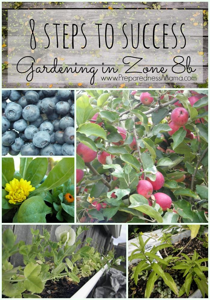 8 Steps to Garden Success in Zone 8b   Home vegetable ...