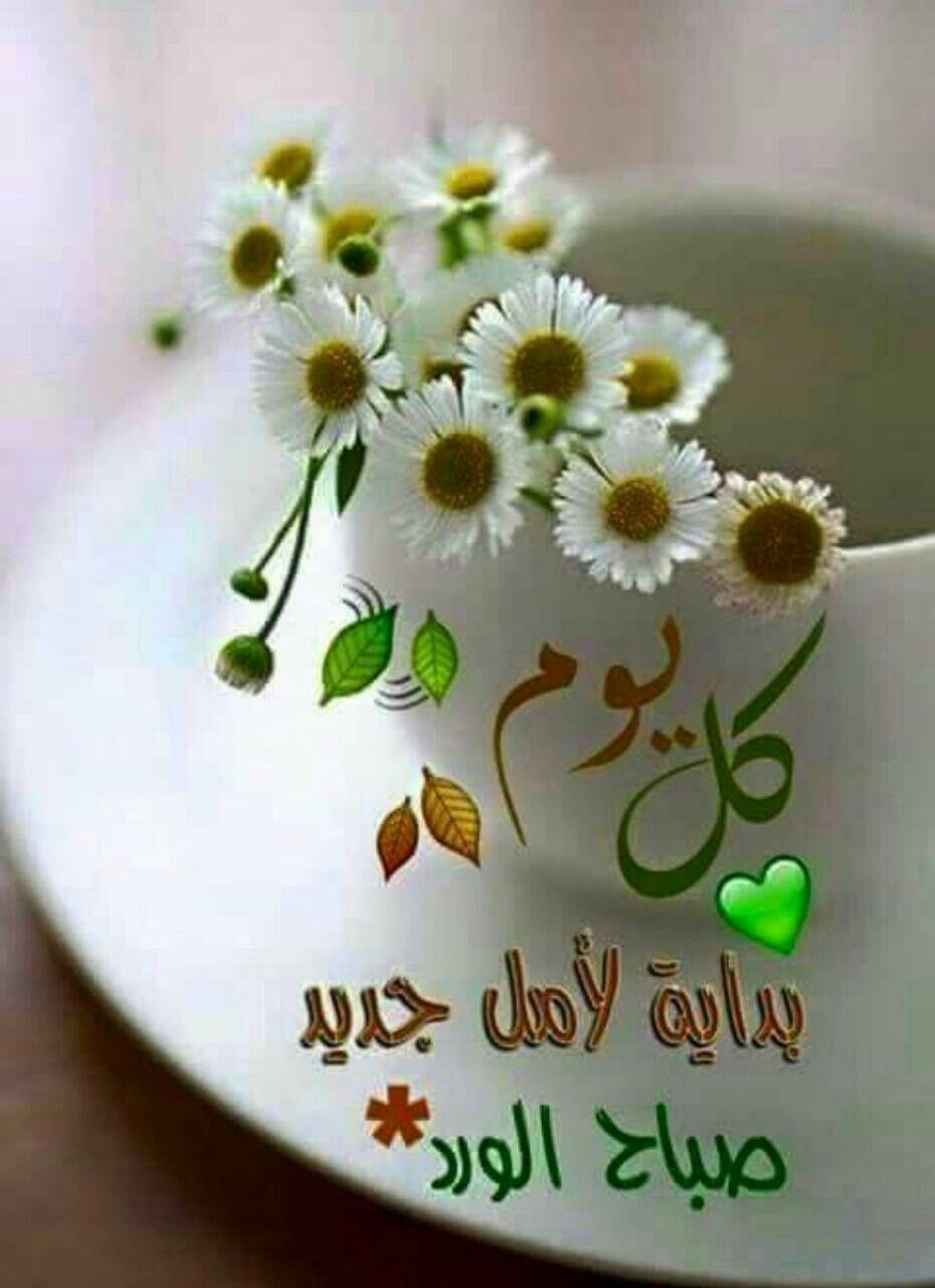 كل يوم بداية لامل جديد صباح الورد Beautiful Morning Messages Good Morning Arabic Good Morning Greetings