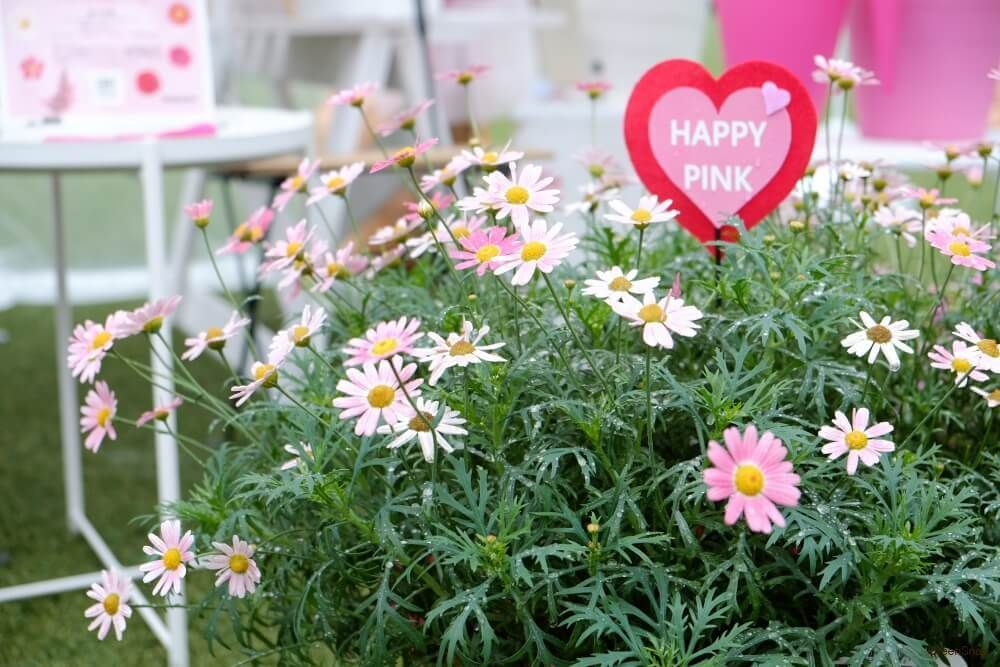 マーガレットの花言葉 恋占いにぴったりの花 種類や見ごろの季節は Horti ホルティ By Greensnap マーガレット お花 花 植物 Greensnap Horti 花言葉 挿し木 6月 花