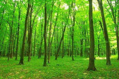Naturaleza Verde Imágenes