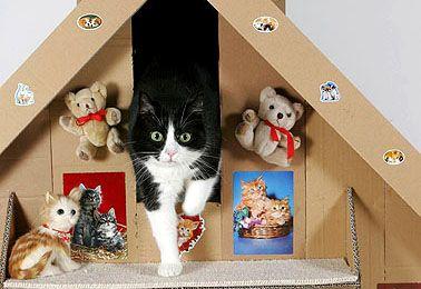 Bau- und Basteltipps für Katzenfreunde - Geliebte Katze