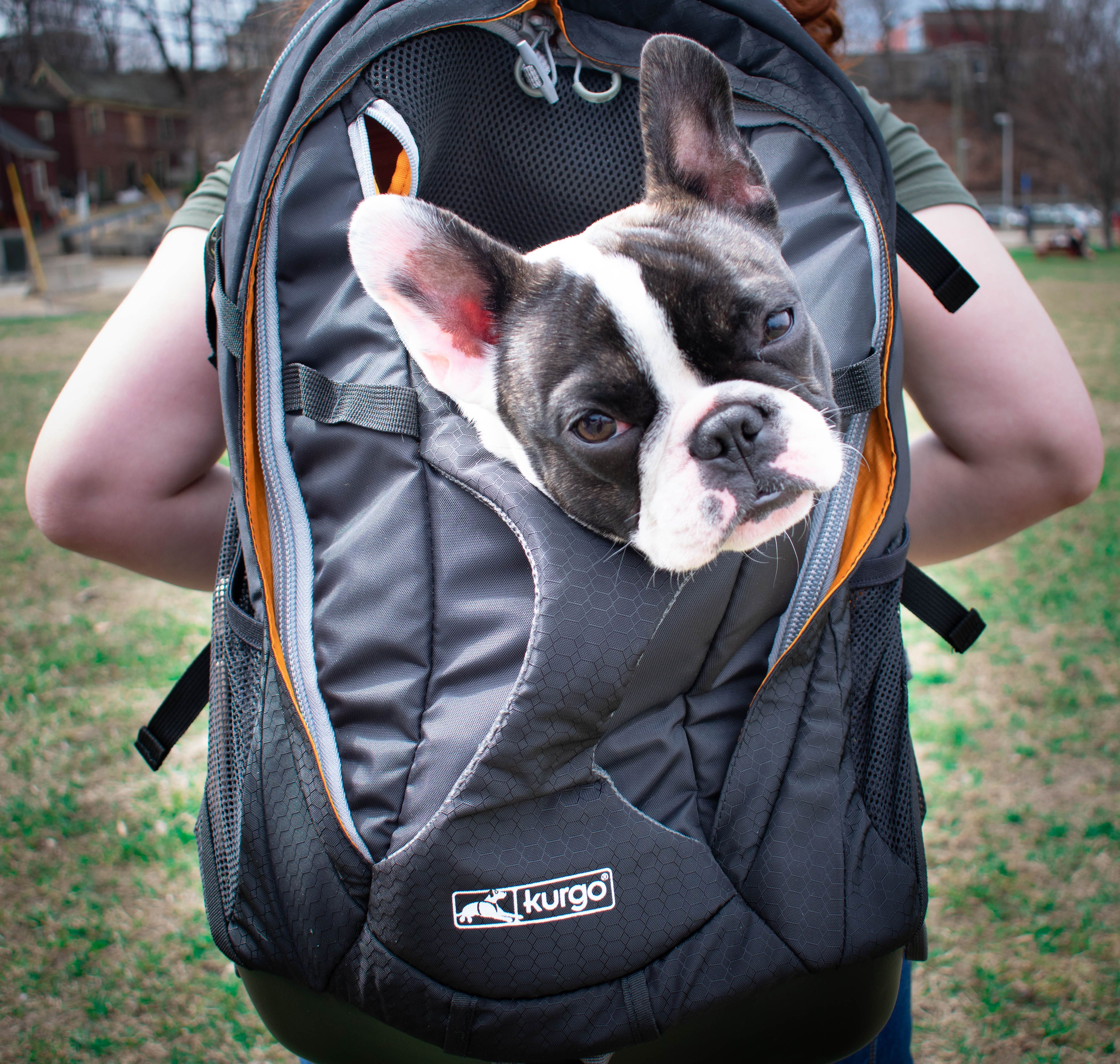 Ready Set Prime Amazon Prime Day Starts At 3am Est On Monday June 15th Stock Up On Kurgo Gear While The Sales L Hiking Dogs Dog Travel Training Your Dog