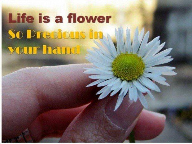 Image result for beautiful flower life quote