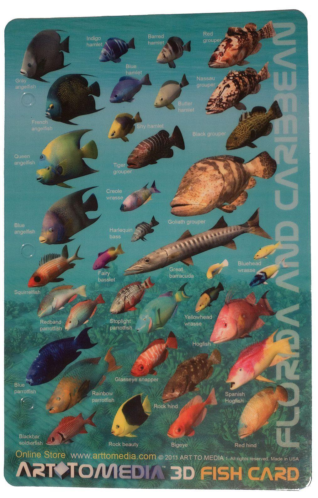 Fish aquarium identification - Florida And Caribbean Fish Identification Card