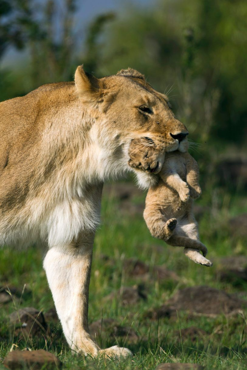 Cute Mother and Baby Animal Pics Baby animals pictures