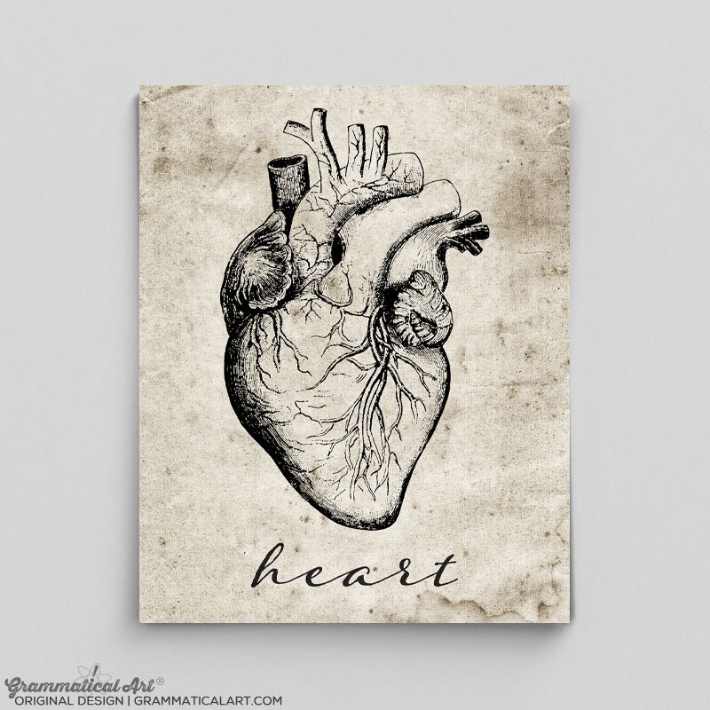 Heart Anatomy Print Grammaticalart Grammar And Science