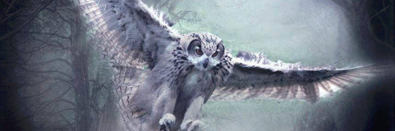 Snowy Owl is a raptor