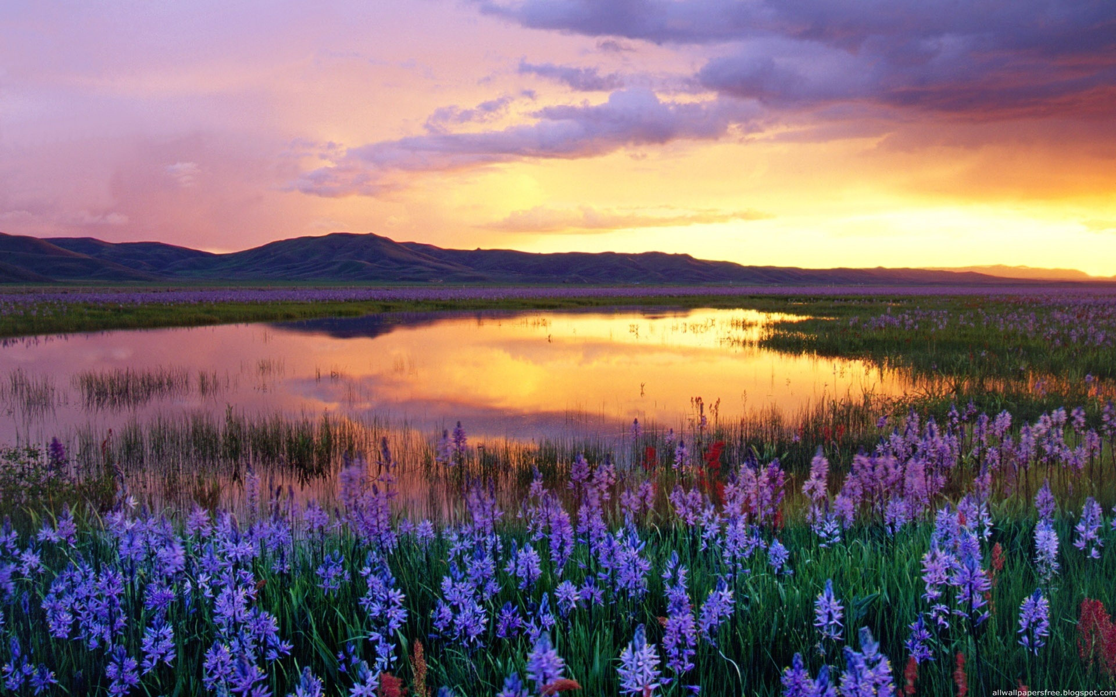 Flower Landscapes Download Wallpaper 3840x2400 Flowers Lake Mountains Evening