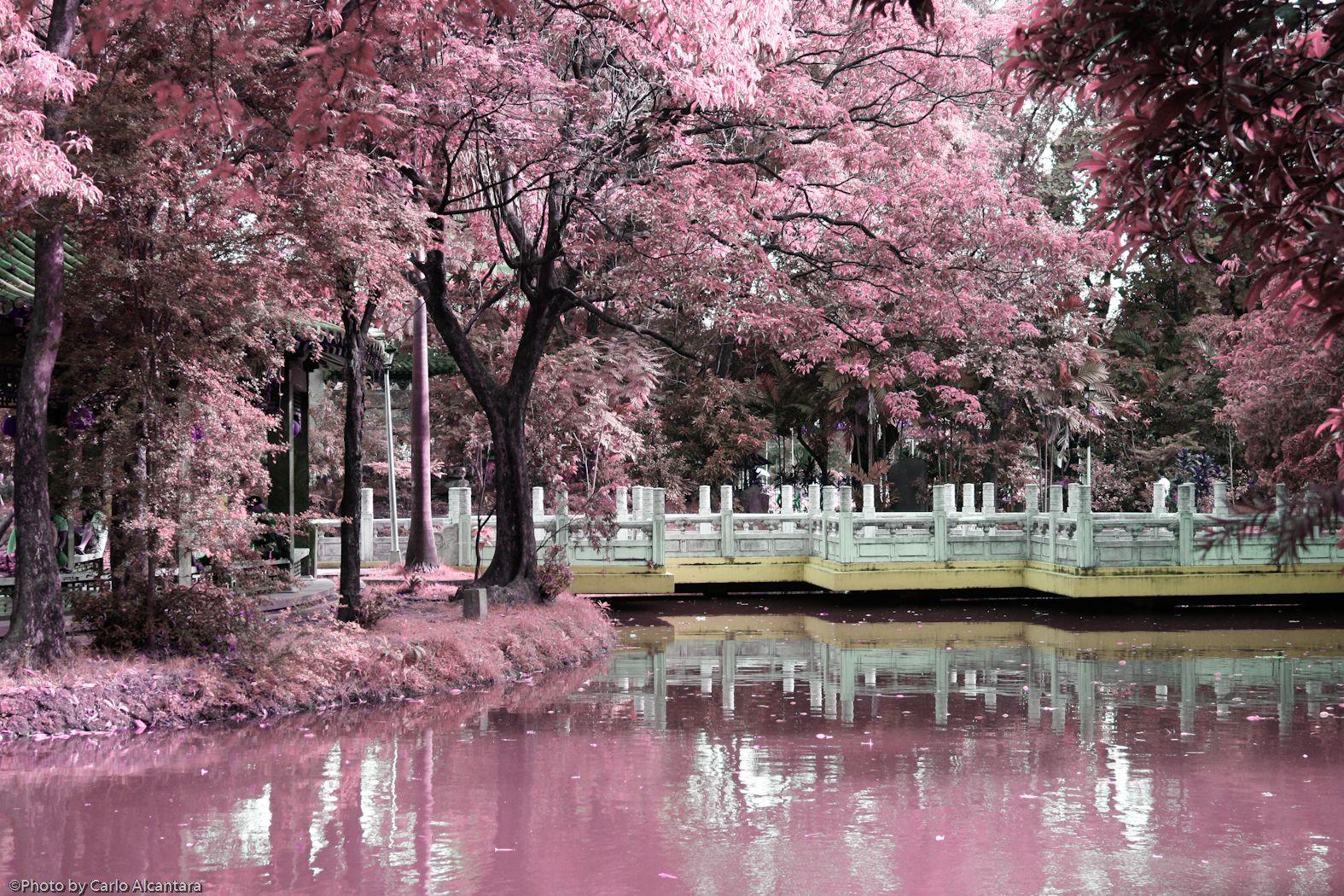 Chinese Garden Wallpapers Chinese Garden Japanese Garden Chinese Landscape