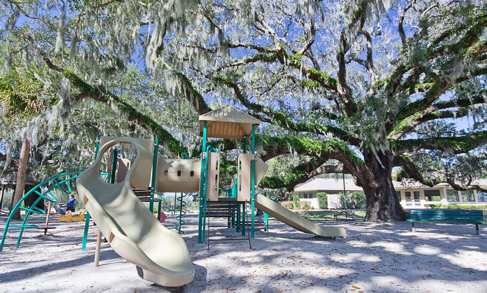 Bostwick playground, live oak tree with epiphytic