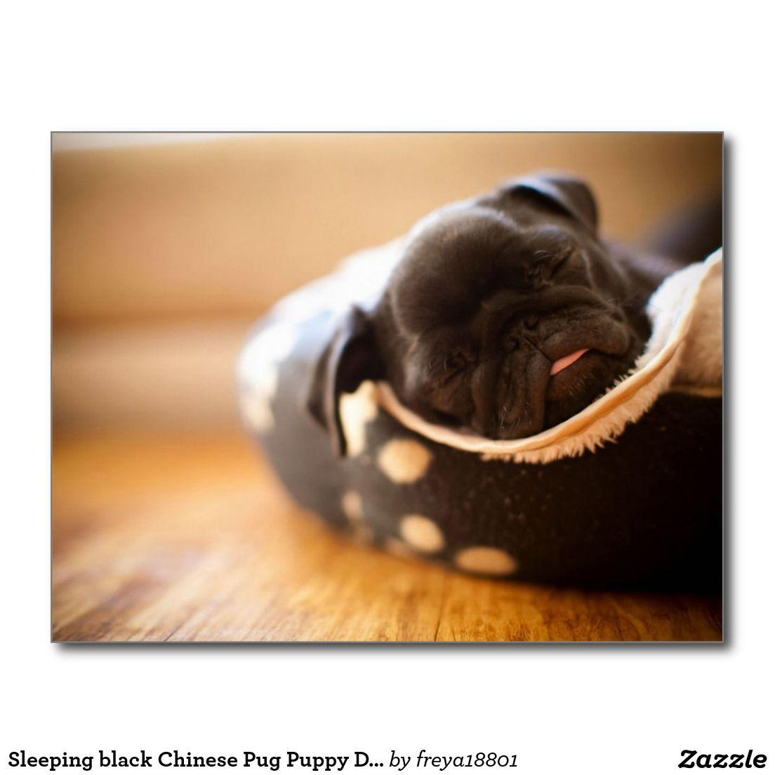 Sleeping Black Chinese Pug Puppy Dog Postcard Zazzle Com Baby