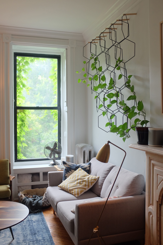 Pin by seth dye on modern dorm in 2018 pinterest - Enredaderas de interior ...