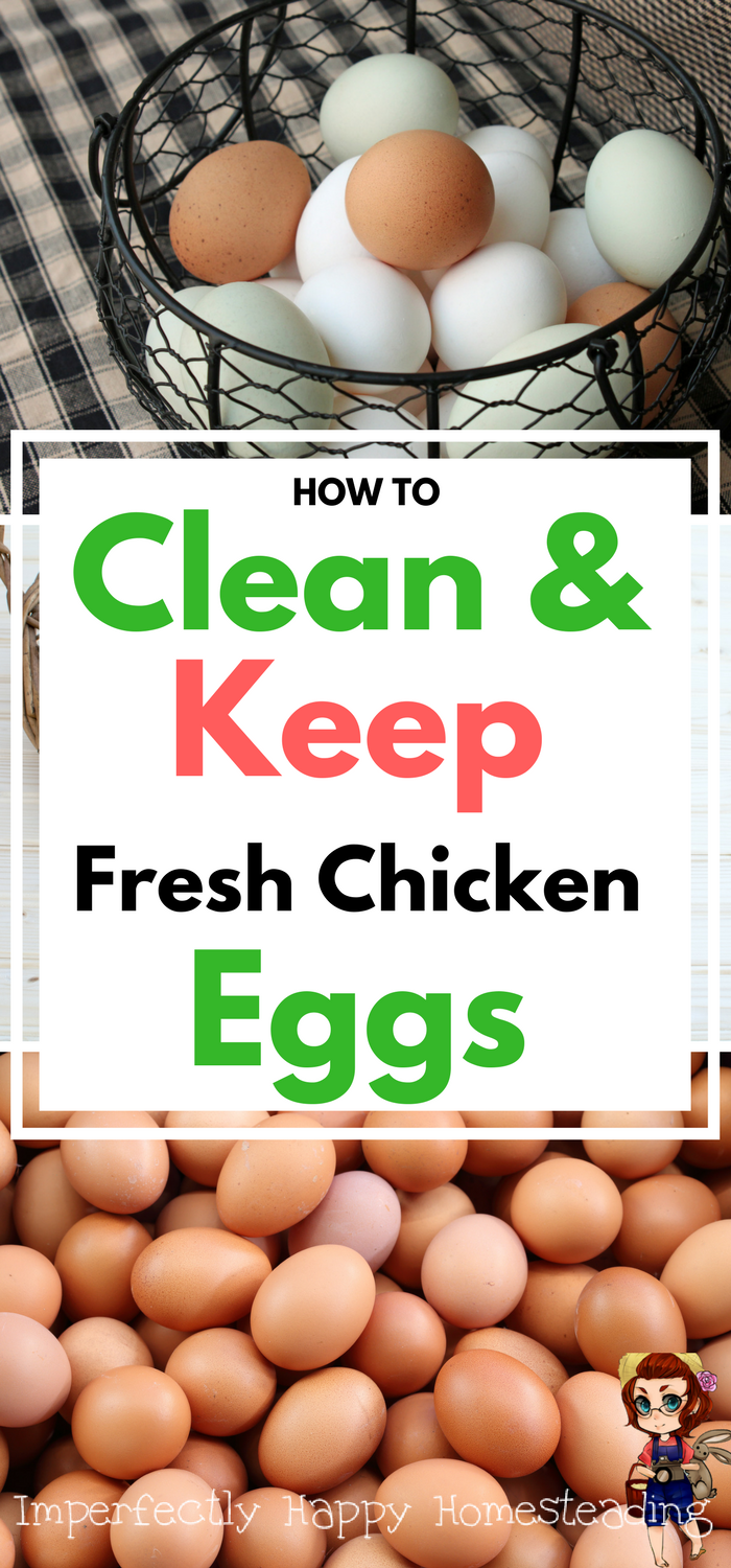 fresh eggs how to clean keep store and the determine