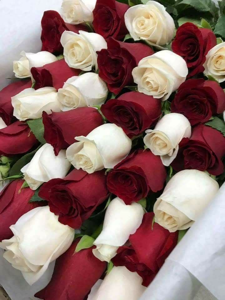 Epingle Par Sabrina Hala Sur Rose Fleurs Rares Fleurs Rose