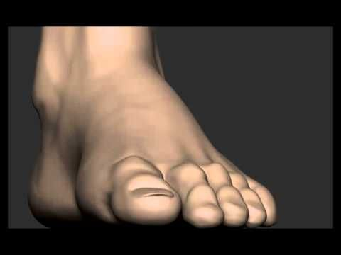 Sculpting feet in ZBrush [CGNUGGETS! - Anatomy series] - YouTube