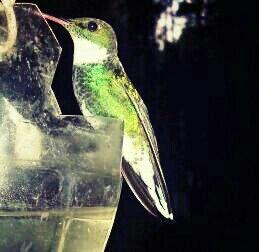 Foto propia de un colibri