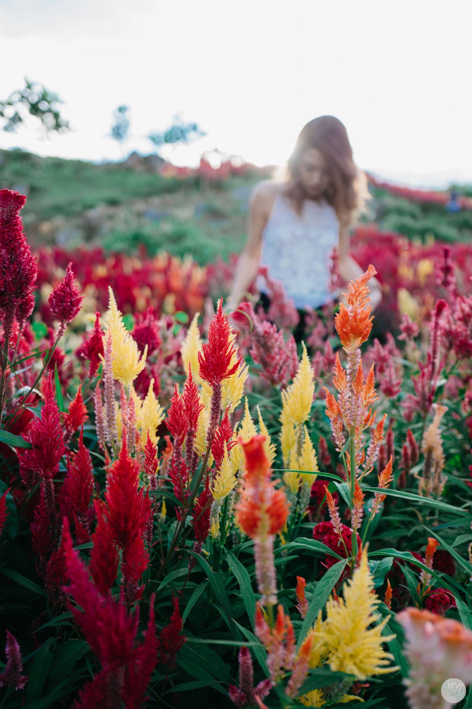 Sirao Flower Garden Thirstythought Flower garden