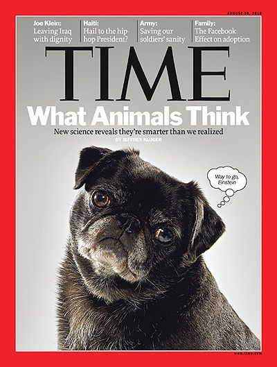 Pug Makes Cover Of Time Magazine Cute Pugs Pugs Kisses Pugs