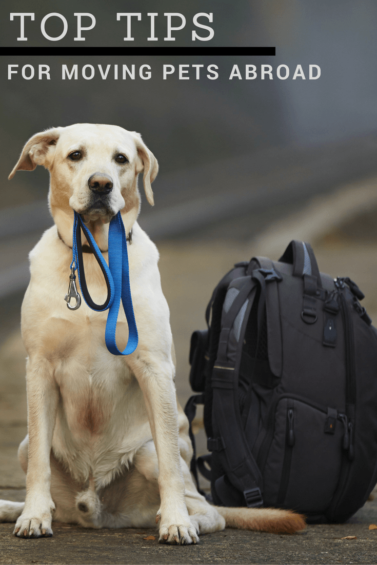 Top Tips For Moving Pets Abroad A Tale Of Two Retrievers Pet