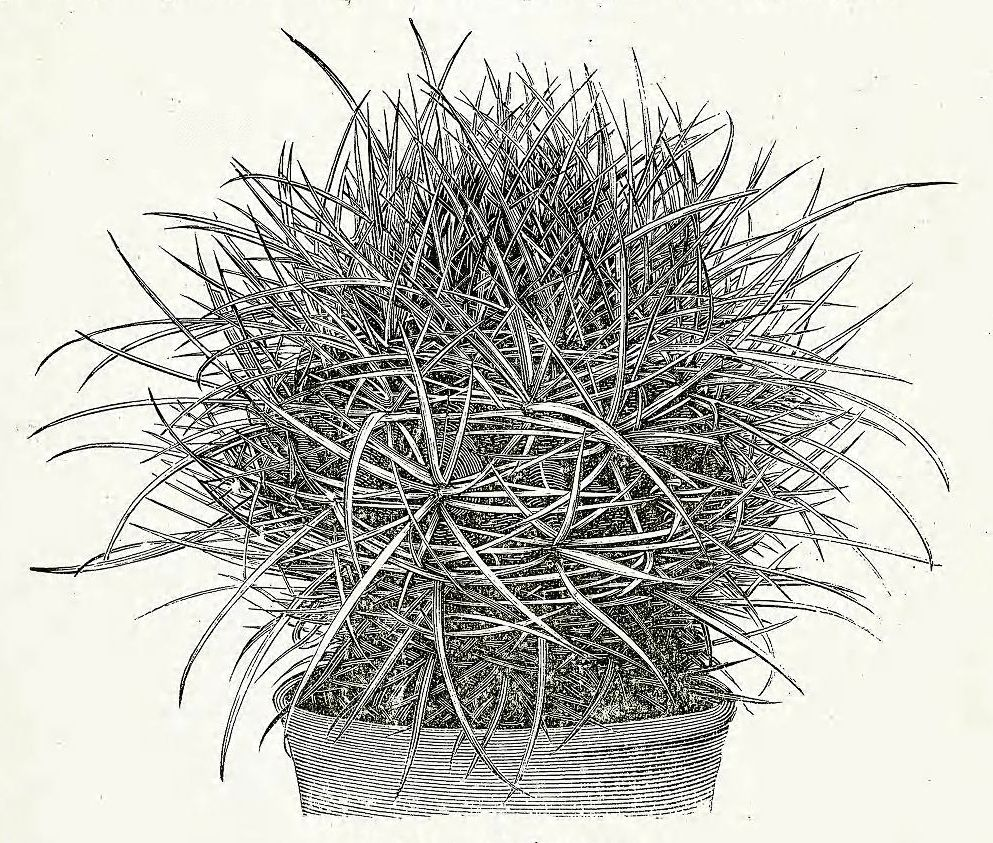 """clawmarks: """" Most complete commercial collection of this kind in the world : catalogue of cacti novelties, odd and rare plants a specialty - 1906 - via Internet Archive """""""
