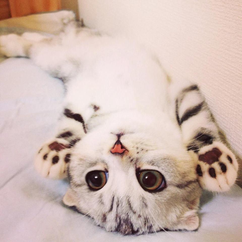 Сначала ты думаешь, что никого никогда не полюбишь, а потом в твоей жизни появляется кот...