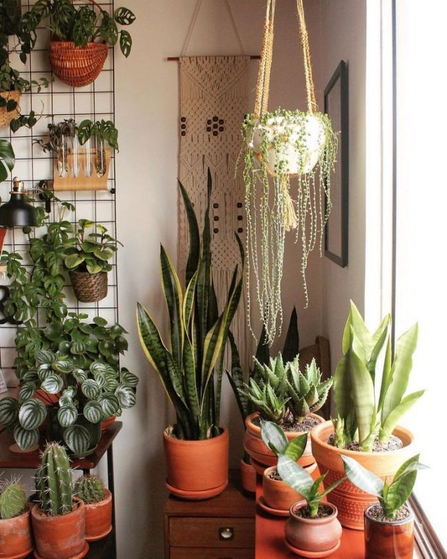 Bedroom plants decor house room plant indoor also pin by on pinterest rh
