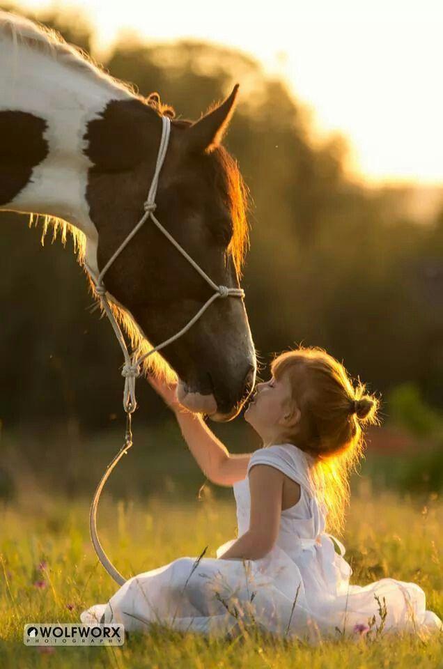 pin by dada on fotos animals horses animals beautiful