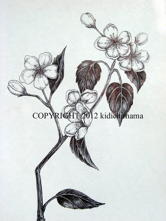 Original pen and ink cherry blossom flower drawing ...