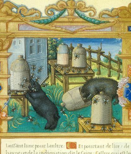 Les ours voleur de miel. Enluminure Manuscrit « Fleur de vertu » de François de Rohan ...