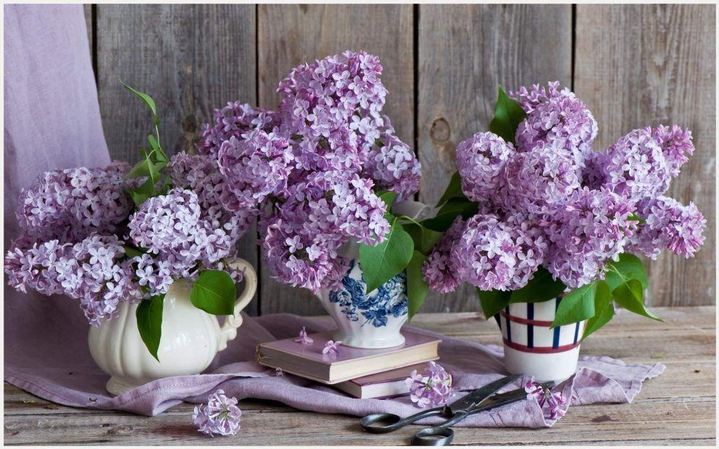Bucket Tag wallpapers: SPRING CORNER Twigs Flowers Grass Bucket ...