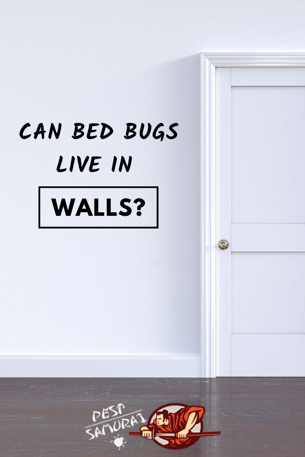 Bed Bugs On Walls Can Bed Bugs Live In Walls Bed Bugs Home Remedy For Headache Rid Of Bed Bugs