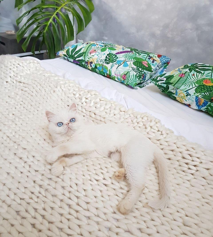 #casa #apartamento  #quarto #quartodecasal #gato #cat #catlover #instacat  #persiancat #cimentoqueimado #bedroom #decoração #decor #decoracao #amomooui #designcomafeto #boanoite #boho #hygge #interiordesign #interiordecor #homesweethome #myhome #homedecor #scandinavianhome #nordicdesign ##lovedecor #manta