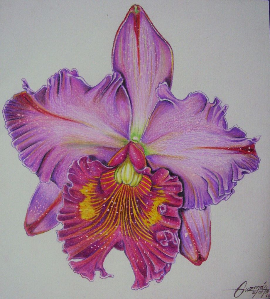 how to draw orchids with pencil