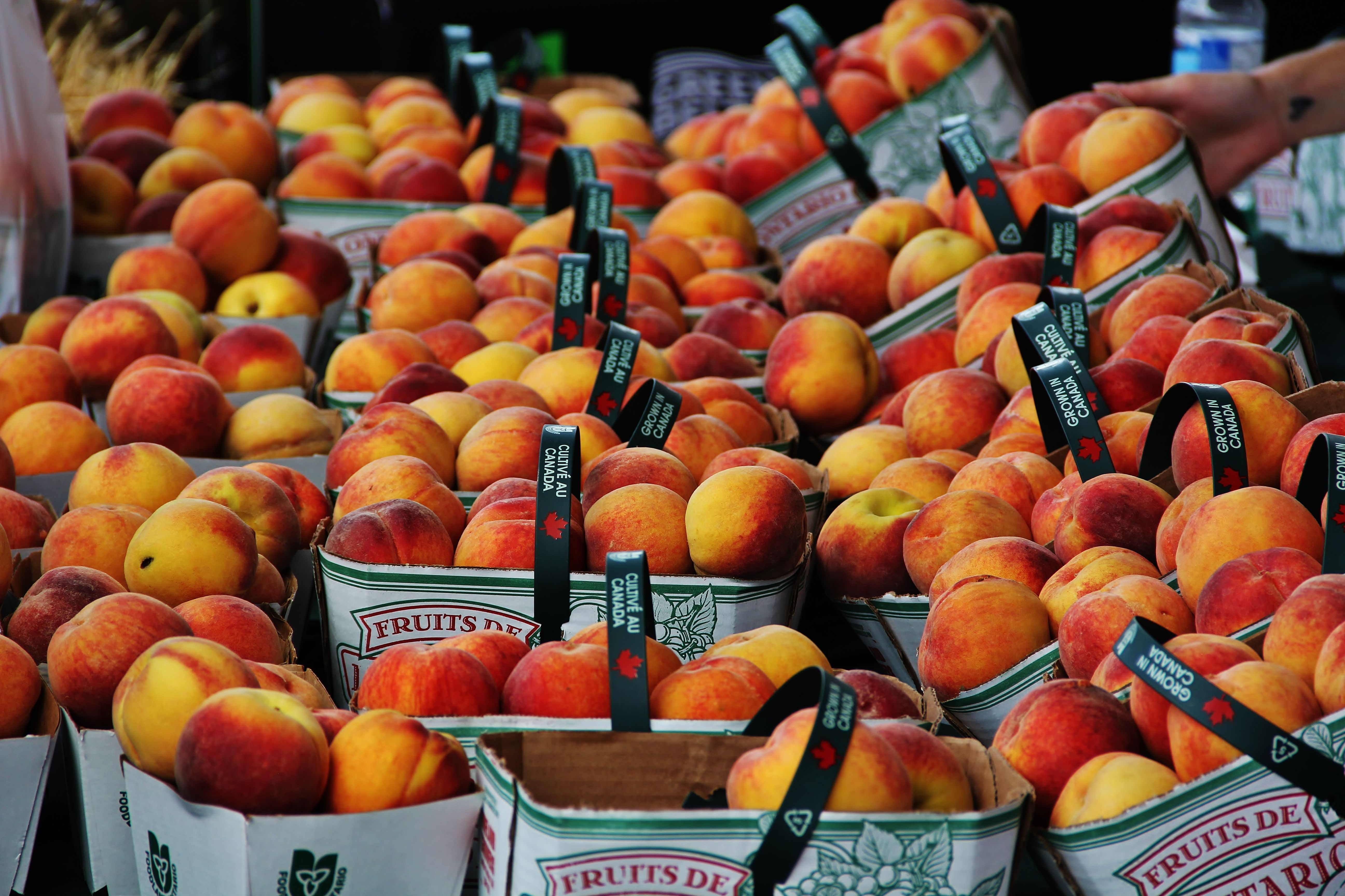 The Peach Festival Niagara On The Lake Is A Pretty Peachy Place To Be At Least That S The Way I Feel L Peach Festival Niagara On The Lake Niagara Region