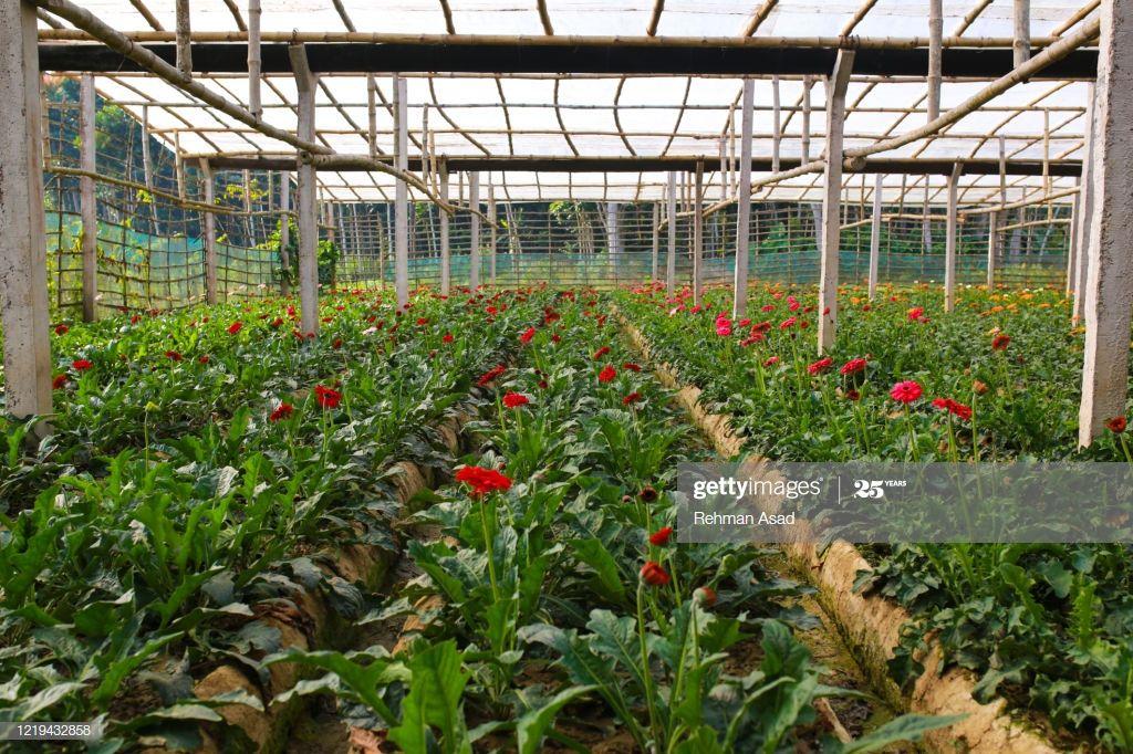 Gerbera Daisy Flower Plant In 2020 Planting Flowers Plants Gerbera Daisy