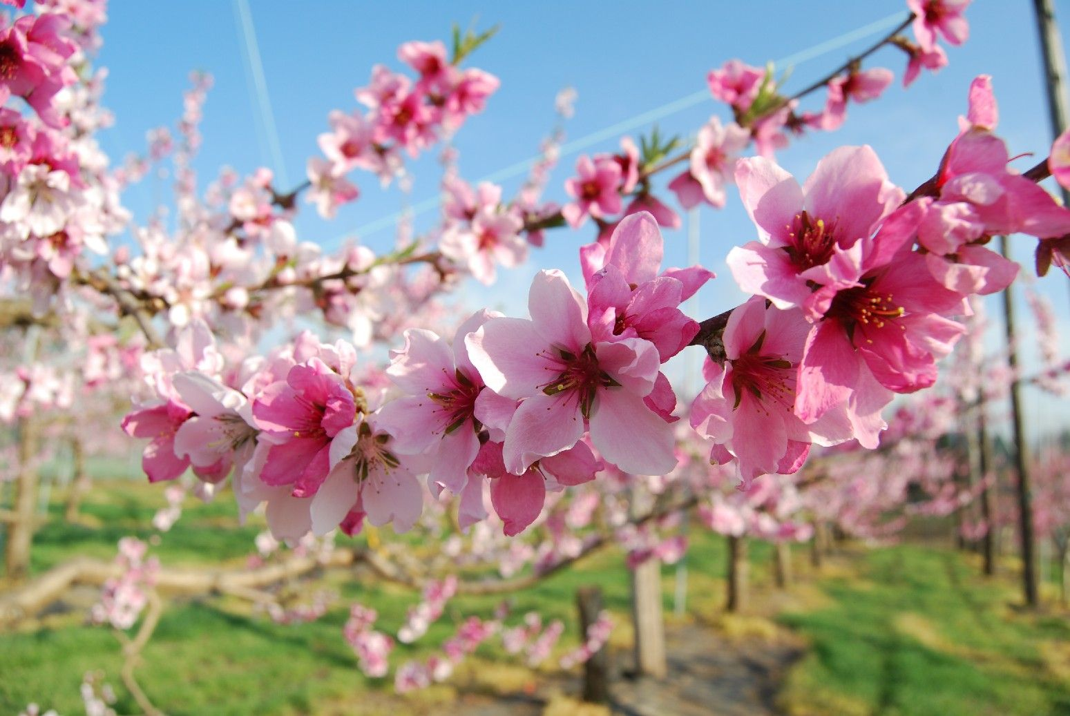 10 Beautiful Japanese Flowers And Their Meanings Tsunagu Japan Flower Meanings Japanese Flowers Flowers Photography